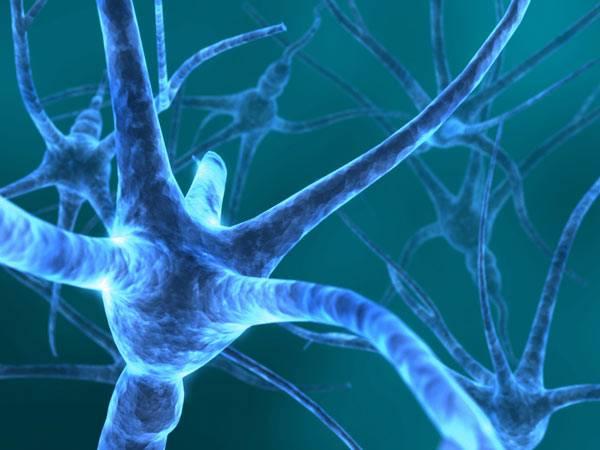 """Biologové z Harvardské univerzity na počátku letošního roku objevili způsob, jakým na molekulární úrovni dochází k """"přepisování"""" vjemů do dlouhodobé paměti."""