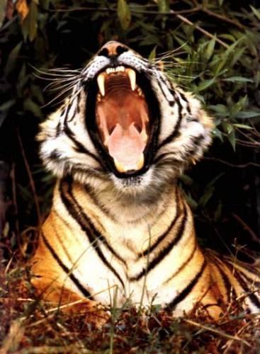 Přestože z pozemské fauny a flory zmizí každým rokem stovky druhů, dochází i v současnosti k nenadálým a překvapivým objevům nových zvířat i rostlin. Počátkem tohoto roku byly zveřejněny výsledky expedice do nepřístupných pralesů Bornea, kde vědci nalezli desítky druhů zvířat, které věda dosud neznala.