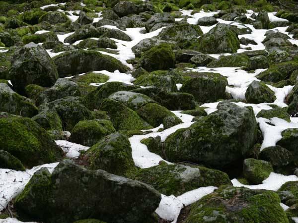 Daleko na severu nebo na antarktickém kontinentu, v oblastech věčného sněhu a ledu, ale i na stěnách himalájských velikánů až v sedmitisícové výšce, se můžeme setkat s rostlinami, které patří k těm nejpodivuhodnějším na světě. Jsou to lišejníky.