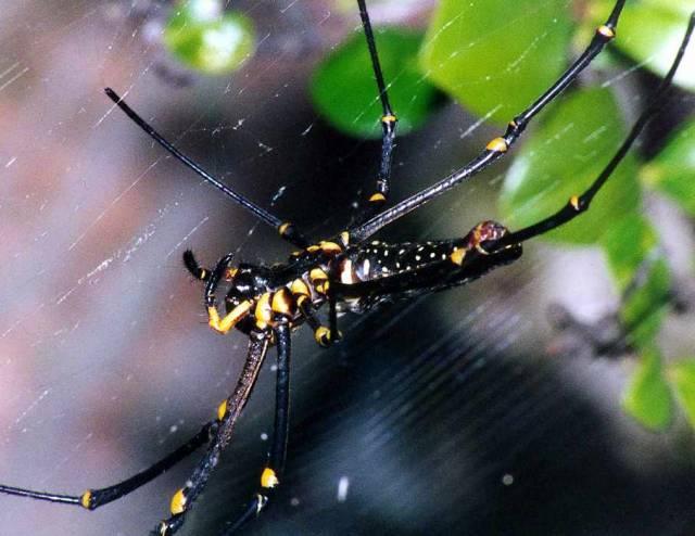Když se pavouk chce dostat stovky kilometrů daleko, stačí mu za pomoci svého vlákna chytit vítr.