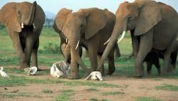 Britští a američtí vědci potvrdili, že sloni jsou schopni sociálních projevů, které se většinou připisují jen člověku.