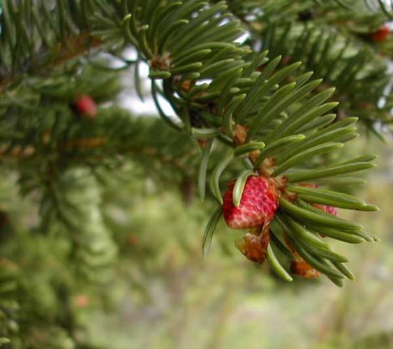 Mnohé ohrožené a vzácné druhy rostlin se těžko množí přirozenou cestou. Proto dnes nastupuje kultivace rostlin nebo jejich částí v umělých podmínkách. Na celosvětovém výzkumu se významnou měrou podílejí i naši vědci.