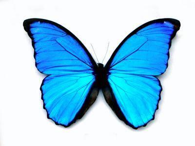 Motýlí křídla učí materiálové experty.