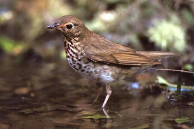 Američtí vědci odhalují strategii odpočinku stěhovavých ptáků.