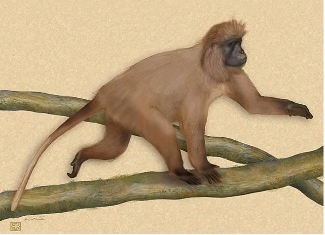 Zoologům se nedávno povedl nevídaný kousek. Objevili nový druh primáta, kterému hrozí bezprostřední vyhubení. Kdyby ještě pár desítek let unikal pozornosti vědců, nemuseli bychom se o něm už dozvědět vůbec.