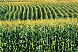 Číňané vymysleli ochranný prostředek, který prodlužuje účinnost pestitidů.