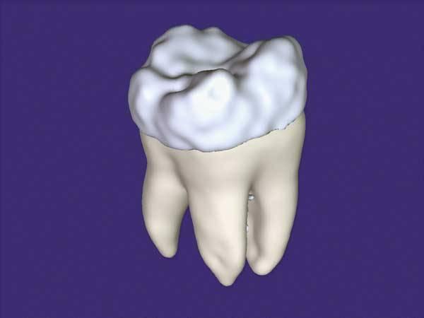 Za zázrak přírody označují odborníci zdánlivě obyčejný lidský zub! Nejen proto, že je pevnější než kost. Narozdíl od ní ale nedorůstá. Může se to v budoucnu výrazně změnit? Narostou nám, třeba díky kmenovým buňkám, trvalé třetí, či snad i čtvrté zuby?