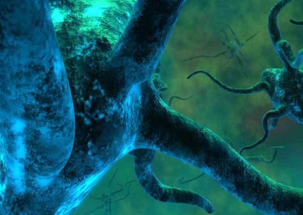 Paměť je pro život a vývoj člověka nezastupitelným nástrojem. Díky ní se vytvářejí zkušenosti, v mozku se ukládají informace pro jejich další použití a je jednou z nezbytných podmínek inteligence. Americkým vědcům se nyní podařilo objevit molekulární základ lidské paměti.