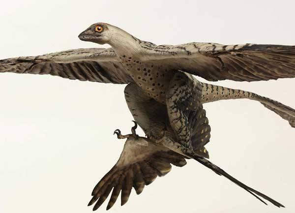 Živočichové poprvé dokázali ovládnout vzduch již před 300 miliony let. Tehdy přestal první vážky bavit pomalý a nebezpečný pohyb po vlastních nohou, a tak začaly zkoušet první primitivní způsob letu. I přes svou jednoduchost zřejmě fungoval, protože vážky dodnes létají stále stejně. Pohyb vzduchem však za tu dobu přeci jen prodělal mnoho změn a stal se tak efektivním, že si jej v mnoha podobách oblíbili i obratlovci.