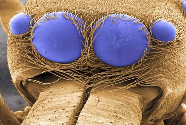 Pavouci (Araneae) patří do řádu bezobratlých živočichů ze třídy pavoukovců. Tato skupina zahrnuje asi 34 000 druhů, z toho v ČR jich žije asi 800. Jejich oči vidí prostorově a jsou schopny zaostřovat na objekty v různých vzdálenostech a měnit úhel pohledu.