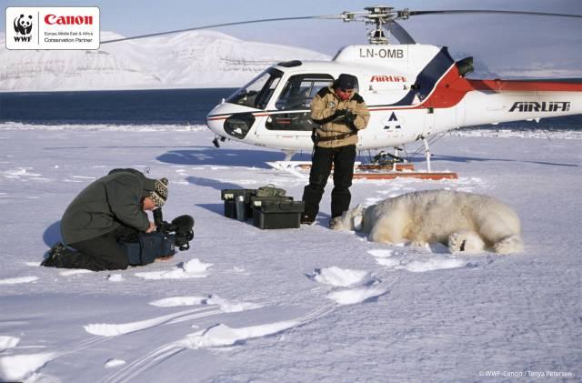 Canon Europe ve spolupráci s WWF zahajuje program na sledování populace ledních medvědů v polárních oblastech.