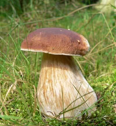 Zdálo by se, že o houbách víme všechno, ale opak je pravdou. Nejnovější výzkumy odhalují stále mnoho nového z jejich života. Vášnivé diskuse mezi vědci se nyní rozpoutaly i kolem jejich vědeckého zařazení. Jsou to rostliny, nebo jsou geneticky blíže živočichům?