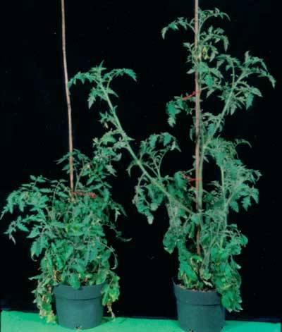 Rostliny se nemohou aktivně pohybovat z místa na místo jako živočichové, nemohou tedy utéci před nepříznivými podmínkami prostředí, například zastíněním nebo suchem. Aby se mohly s těmito okolnostmi vyrovnat, mají vyvinutou řadu důmyslných mechanizmů, kterými vnímají světlo, teplotu, vlhkost, přítomnost jiných rostlin a podobně.