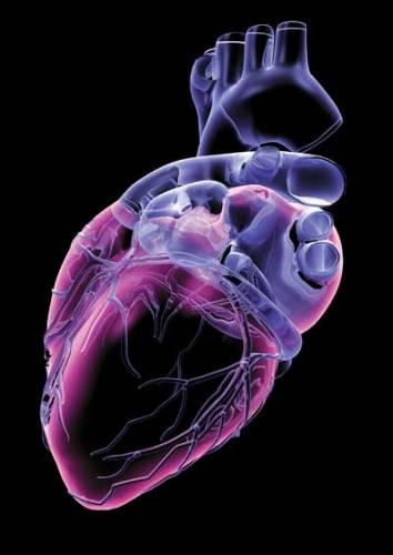 Naši přední odborníci líčí past na záludnou smrt, přicházející pod rouškou chorob srdce a cév. Každoročně si mezi námi vybírá krutou daň - životy více jak 50 000 mužů, žen, ba i dětí. To je totéž, jako by náhle vymřeli všichni obyvatelé Chomutova!