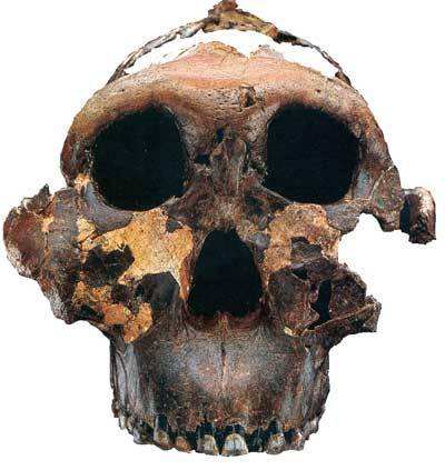 Když se poprvé objevila myšlenka, že člověk pochází z opice, řada lidí byla upřímně zděšena. I ti, co přijali evoluční myšlenku za svou, raději tvrdili, že předchůdce člověka byl jiný tvor. Jenže nikdo svou teorii potvrdit nemohl, mezera ve fosilních důkazech lidské linie zela prázdnotou. Největší spor se rozhořel mezi Louisem Leakeyem a Donaldem Johansonem.
