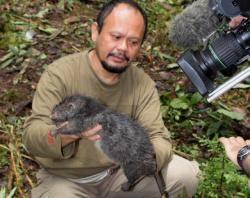 V Indonésii byly objeveny dva nové druhy savců.