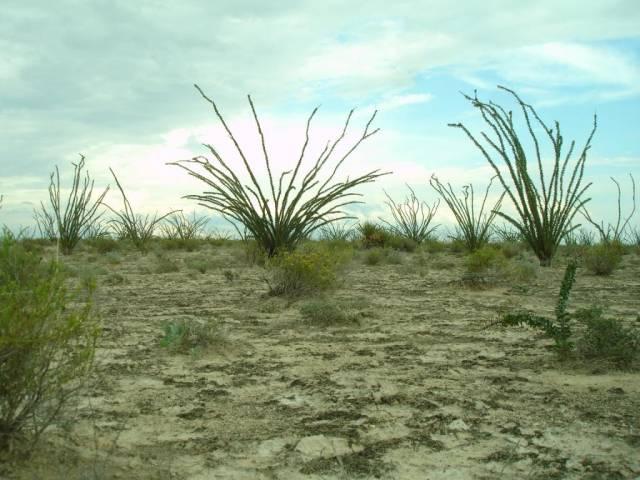 Co se prohánělo po dnešní mexické poušti Coahuila před 72 miliony let?