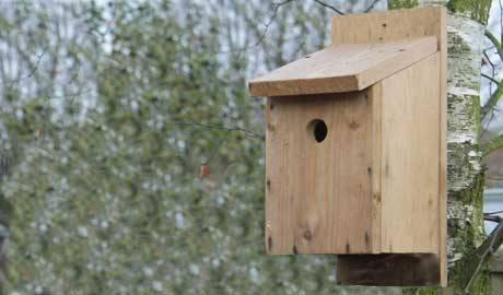 Někteří tažní ptáci mohou vyhynout