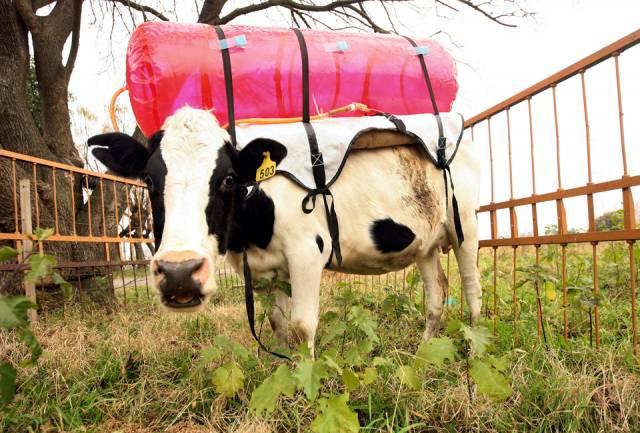Metan, nejjednodušší uhlovodík, je zrádným skleníkovým plynem, který přispívá k oteplování atmosféry. V zájmu lidstva proto je, aby se pokusilo zjistit, jak jeho produkci snížit. V Argentině na to šli skutečně od lesa!