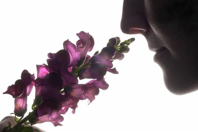 """Čich nehraje mezi lidskými smysly prim a bývá proto neprávem podceňován. Koho by však nepotěšila krásná květinová vůně? Výzkumy izraelských vědců našly cestu, jak přidat květinám na """"voňavosti""""."""