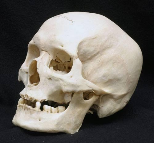 Nálezy zachovaných měkkých tkání dávno zemřelých lidí jsou velmi vzácné. Úplnou raritou je, když se podaří najít zachovaný mozek. K tomuto nálezu došlo nedávno nedaleko anglického Yorku.