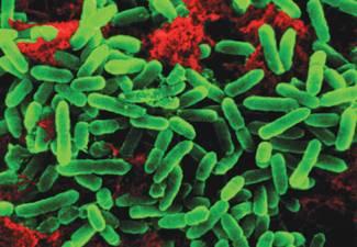 Bakterie patří k nejmenším organismům, jaké lze v přírodě potkat. Přesto jsou pro život na naší planetě klíčové – většina funkcí biosféry by bez jejich intervence prostě nebyla možná. Švédští vědci nyní přišli na další ze způsobů, kterým bakterie přispívají k vyvažování celoplanetárních vztahů.