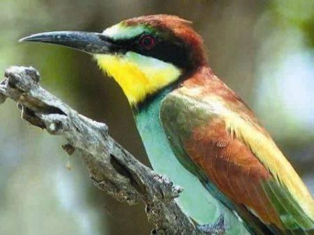 Nádherně zbarvení kolibříci  bažanti, ale i naše vlhy, ledňáčci či mandelíci jsou skutečnými oživlými klenoty. Hlavním úkolem překrásných barev opeření řady druhů ptáků však není ani tak poutat naši pozornost, jako spíše pozornost opačného pohlaví svého druhu, většinou samiček. Američtí vědci nedávno poodhalili tajemství vzniku barevných efektů a velmi se podivili!