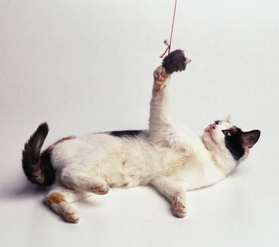 Ačkoliv by většina milovníků koček nedá na své chlupaté mazlíčky dopustit, faktem je, že jsou situace, kdy lze o jejich inteligenci úspěšně pochybovat. Britští vědci přišli se zjištěním, že kočky nedokáží porozumět vztahu příčiny a následku. Psi na tom ale nejsou o nic lépe.