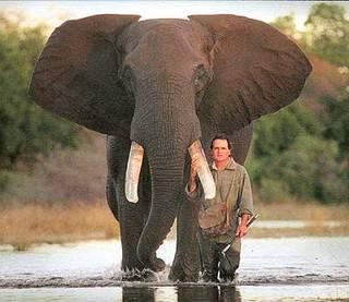 My Evropané vnímáme slony jako roztomilá zvířata, která s potěšením chodíme pozorovat do zoologických zahrad. Afričtí farmáři však vidí slony rozhodně jinak. Stačí jeden nájezd těchto nenasytných jedlíků a celá úroda může přijít v niveč. S jejich problémem by jim mohly pomoci včely.