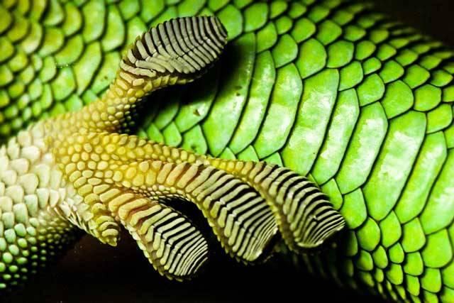 Řadu let nedala vědcům spát otázka, jak to dělají gekoni, že se udrží třeba na hladkém skle jako přibití. Pokud jste někdo zkusil takového gekona odtrhnout, dá to pořádnou práci – jako by byl přilepený.