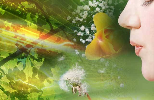 Za posledních 30 let se v České republice počet alergiků zdvojnásobil! Nyní se zde trápí 2–2,5 miliunu alergiků. Z toho jeden milion lidí má alergickou rýmu, u 600 tisíc se vyskytuje průduškové astma a 800 000–1 000 000 jedinců sužuje svědivý atopický ekzém. 21. STOLETÍ vám přiblíží alergie ve světle nejnovějších vědeckých poznatků.