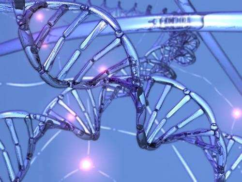 """Molekula deoxyribonukleové kyseliny, která se nachází v jádrech prakticky všech buněk, je molekulou pořádně velikou. Kdyby se celá natáhla, dosáhne délky okolo 2 metrů. Nová studie vědců z amerického Harvardu významně přispěla k našemu poznání, jak přesně je tato obrovitá molekula v buněčném jádře """"smotána""""."""