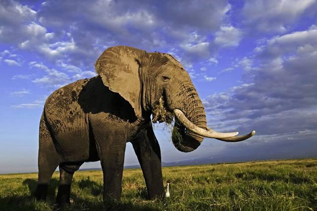 Divoká zvířata, důležitá pro udržování složité ekologické rovnováhu ve volné přírodě, patří k nejdokonalejším přírodním darům. Nejnovější údaje Světového fondu ochrany přírody (WWF) alarmují, že na různých kontinentech množství typických zvířat rapidně ubývá.