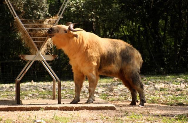 Většina návštěvníků zoologických zahrad má jasno, která zvířata chce vidět nejraději. Co by to bylo za zoo, v níž by chyběli sloni, žirafy nebo nosorožci? Stranou největšího zájmu veřejnosti jsou však v našich zoo často k vidění zvířata, která sice nelákají velikosti či zvláštním vzhledem, nejsou však o nic méně vzácná či zajímavá. 21. STOLETÍ vás nyní seznámí s deseti nejzajímavějšími z nich.
