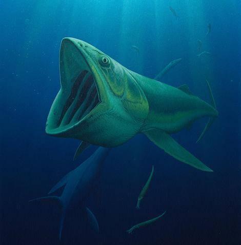V dnešních mořích představují planktonožravé organismy, jako jsou velryby, rejnoci manty či žraloci obrovští ty největší z jejích obyvatel. Pro vědce bylo dlouho tajemstvím, proč podobní obři nebyli i současníky dinosaurů. Studie publikovaná nedávno v časopise Science však uvedla tento omyl na pravou míru.