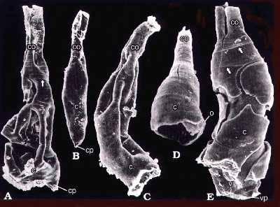 Britští vědci nedávno provedli analýzu planktonních mikrofosílií z konce prvohorního ordoviku a vyčetli tak řadu nečekaných podrobností o zalednění, které pravděpodobně nastartovalo jedno z největších vymírání v dějinách planety.