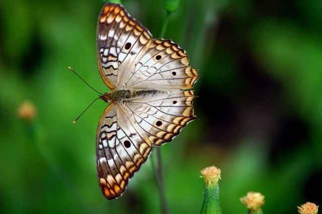 Nadace pro ochranu tropů Ceiba (s ústředím v americkém městě Madison) se zabývá záchranou a rehabilitací tropických lokalit a zachování jejich fauny a flóry.