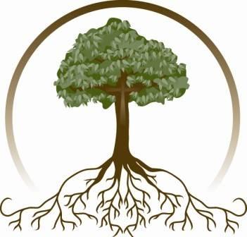 Výzkum nejrůznějších typů spolupráce v živém světě přináší nejen spoustu fascinujících poznatků, ale může být také velmi užitečný. Lepší poznání  spolupráce kořenů rostlin s houbami ukazuje, že vlákna hub tvoří síť nikoliv nepodobnou internetu, díky níž dokáží rostliny efektivně spolupracovat a vzájemně si i napomáhat v léčení.