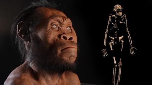 0000014f-b66e-deef-a9ef-b66e2cbe0000-new-human-ancestor-discovered-homo-naledi-exclusive-video