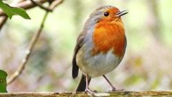 Čím to, že ptáci vydrží hladovět?