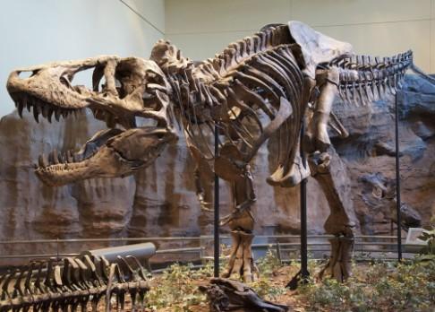 Vyhynutí dinosaurů pomohla sopečná činnost