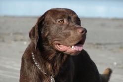 Americká studie: Máme raději psy než lidi