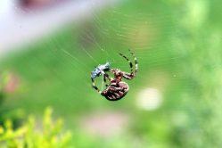 V České republice byl objeven nový druh pavouka