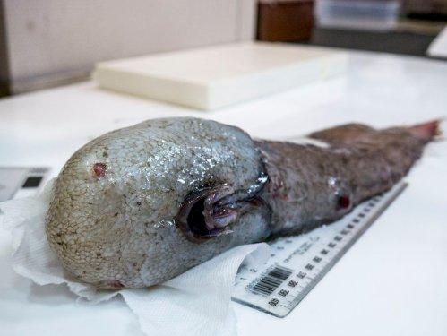 V Austrálii objeveny nové druhy ryb