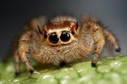 Patří pavouci mezi hmyz?