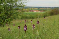 České orchideje v Pardubicích