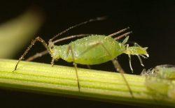 Hmyz ve službách armády? Vojáci ho chtějí využít k ochraně polí