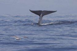 Velryby stresovala druhá světová válka, zjistili vědci