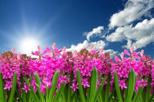 Botanici vyvinuli kybernetickou rostlinu, která se otáčí za světlem