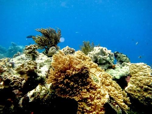 Ptačí trus prospívá korálům